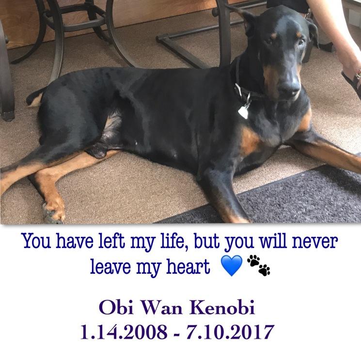 Final Days Dog Congestive Heart Failure
